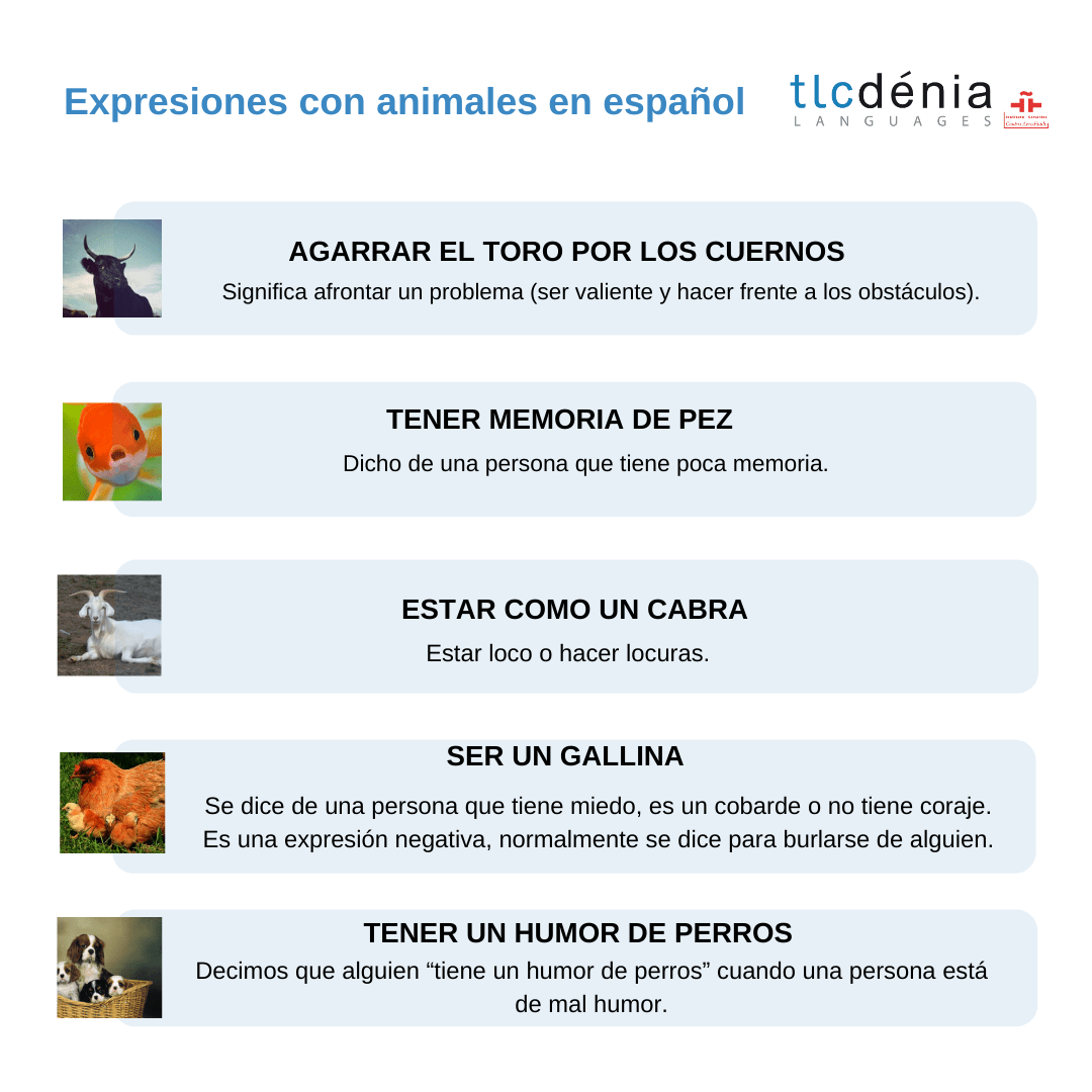 Spanish expressions with animals chart