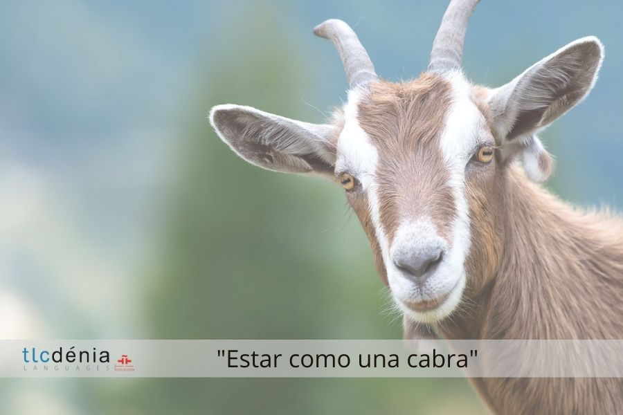 Spanish expression: estar como una cabra