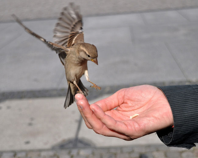 a bird that takes food in a person's hand
