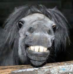 A smiling horse