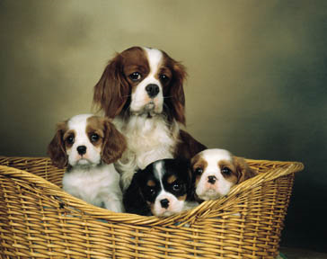 Four dogs on a basket