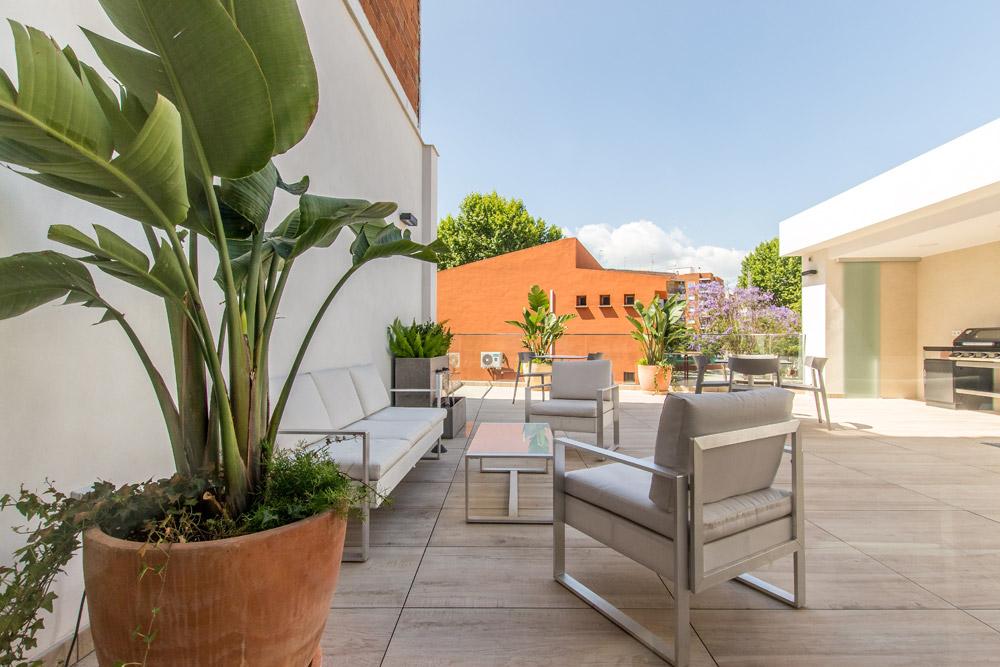 school spanish terrace plants