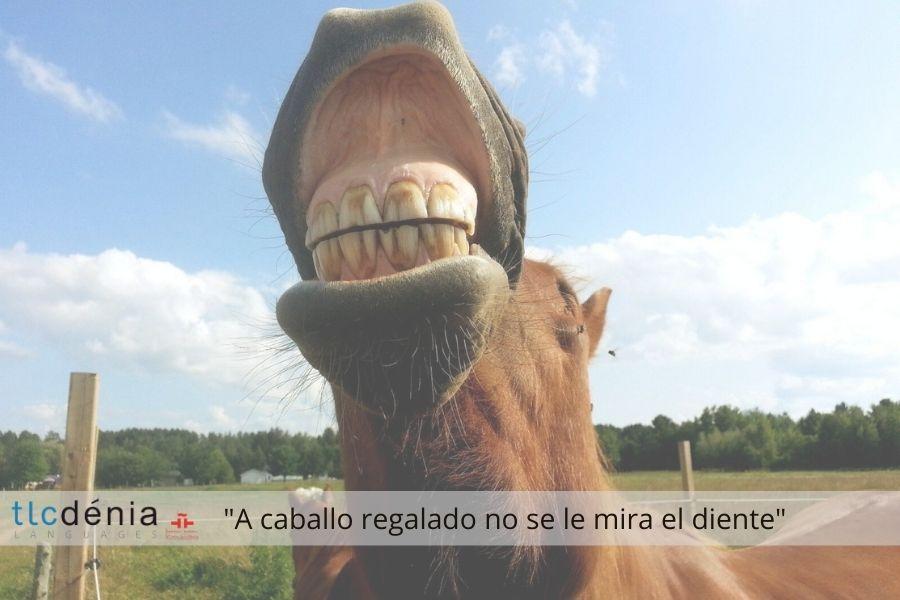 Expression en espagnol a caballo regalado no se le mira el diente