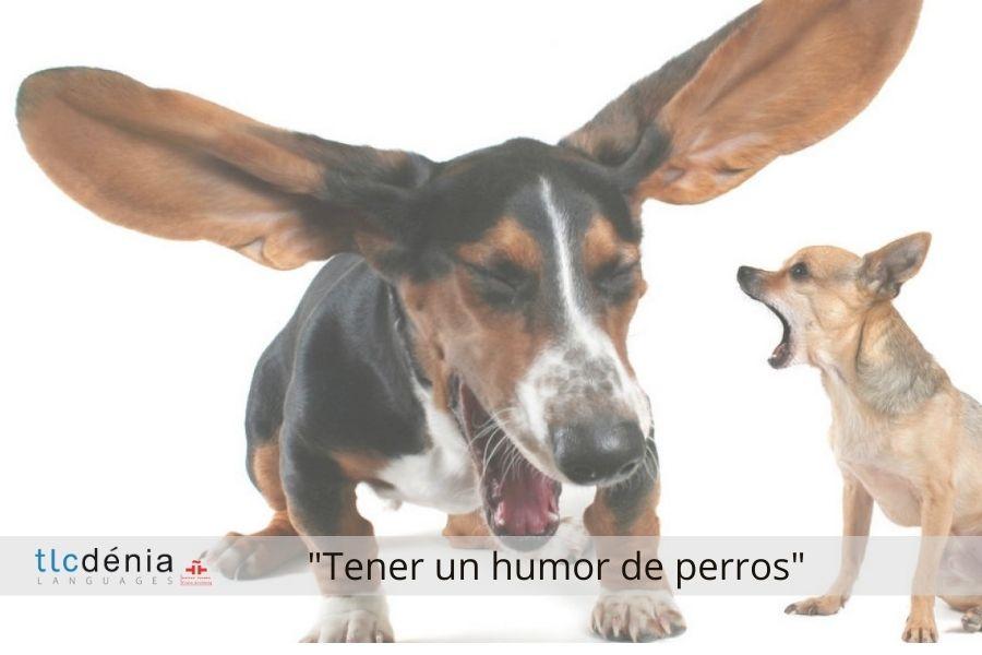 Expression en espagnol tener un humor de perros