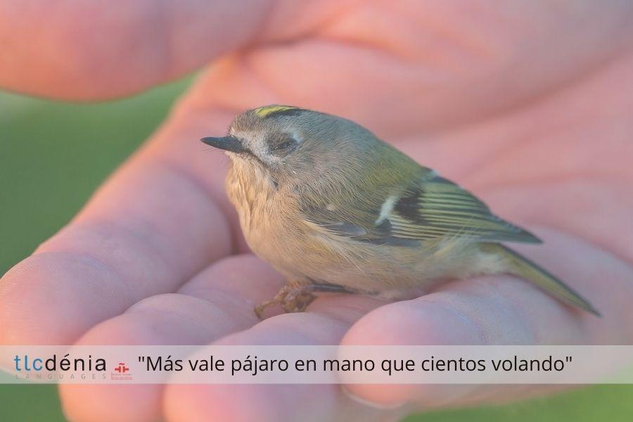 Expression en espagnol más vale pájaro en mano