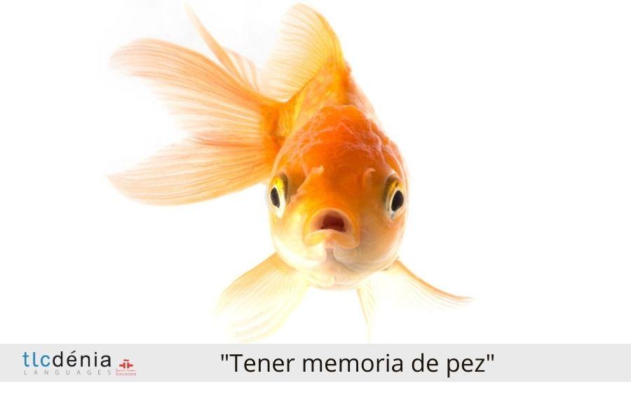 Expression en espagnol tener mejoria de pez