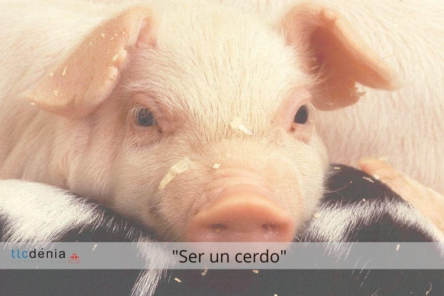 Expression en espagnol ser un cerdo
